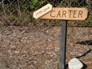 We Miss You Carter
