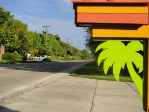 Passion For Palm Trees?