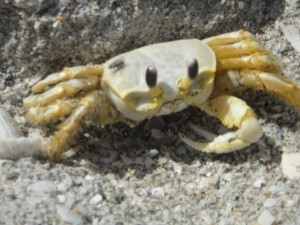 Are You Unknowingly Crabby?